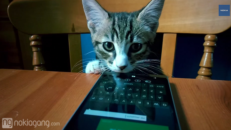 Cat-using-Lumia-930-3